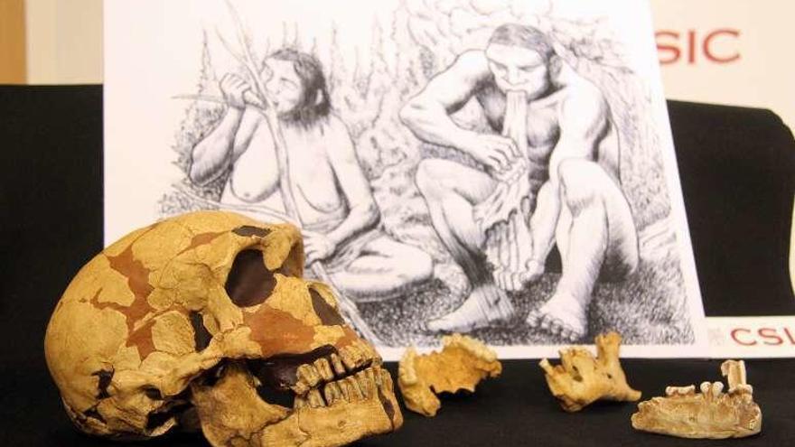 El hombre de Neandertal tenía el tórax más amplio para inhalar más oxígeno