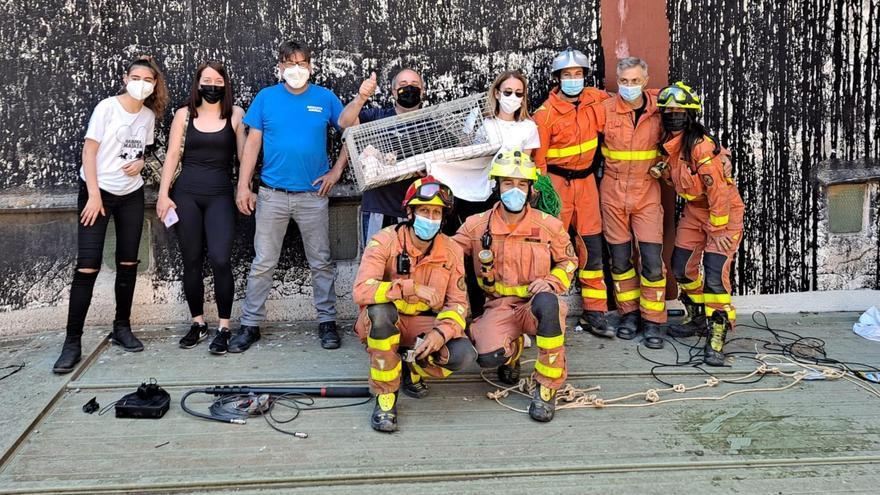 Así han rescatado los bomberos a un gato enganchado en los bajos de la Casa de la Cultura de Alzira