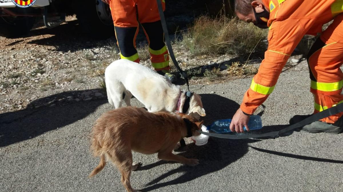 COMUNIDAD VALENCIANA.-Valencia.- Sucesos.- Bomberos rescatan a dos perros atrapados en un barranco en Teresa de Cofrentes