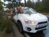 Umgestürzter Baum in der Gemeinde Felanitx.