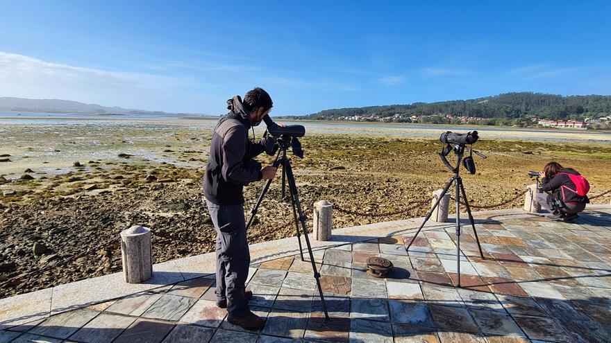 O Grove repite como plataforma de observación ornitológica