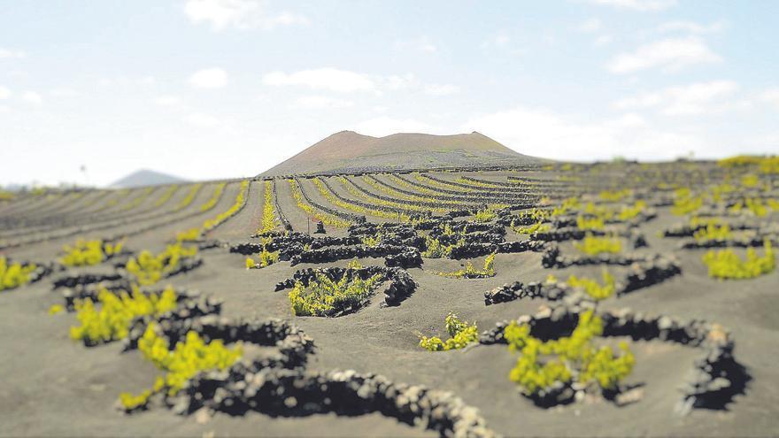 El Consejo Regulador califica de muy buenos los vinos de la añada de 2020