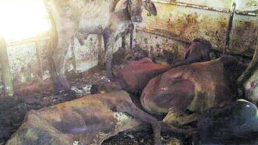 Hallan miles de vacas en mal estado en un barco en el Puerto de Las Palmas