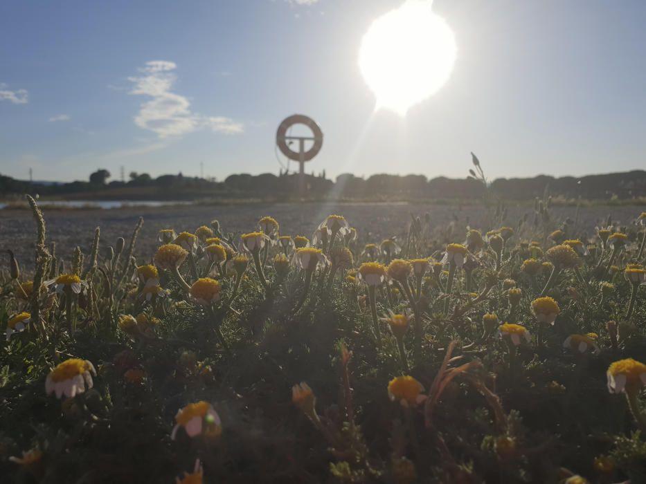 Bages. El sol ja marxa, es vol acomiadar fins l'endemà, però no ho fa sense abans mostrar els seus últims raigs. Aquesta bonica imatge està presa al parc de l'Agulla de Manresa.