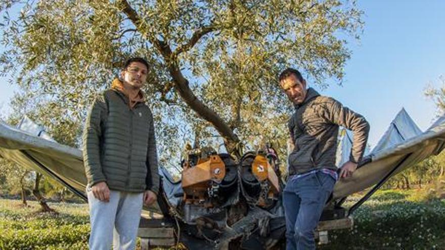 Un aceite de Castellón gana el premio al mejor Aceite de Oliva Ecológico de la Comunitat