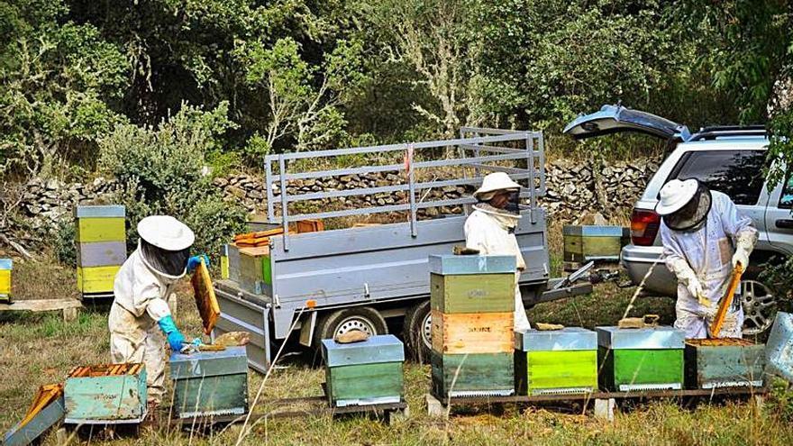 Los apicultores de Aliste piden que los trashumantes cumplan la ley