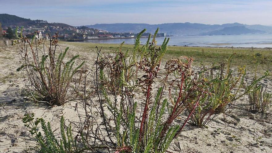 Luita Verde denuncia daños en las dunas de A Xunqueira con motivo del campeonato de balonmano