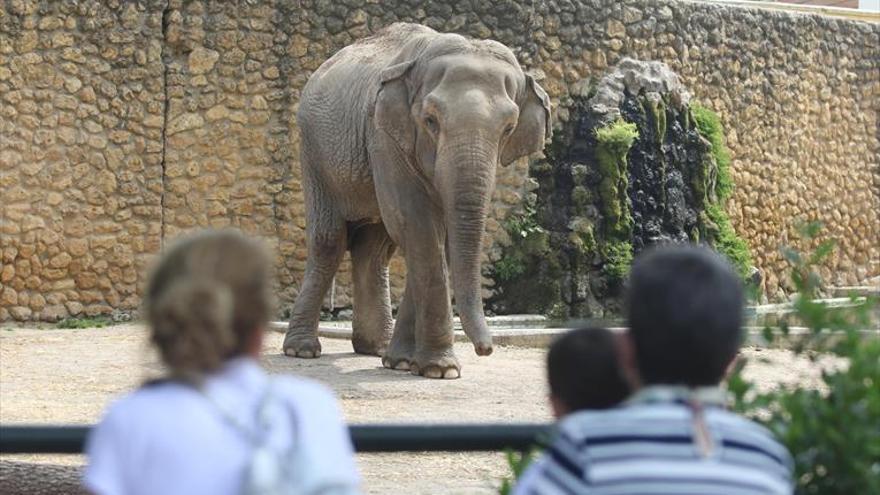 Los niños le pusieron el nombre a la elefanta 'Flavia'