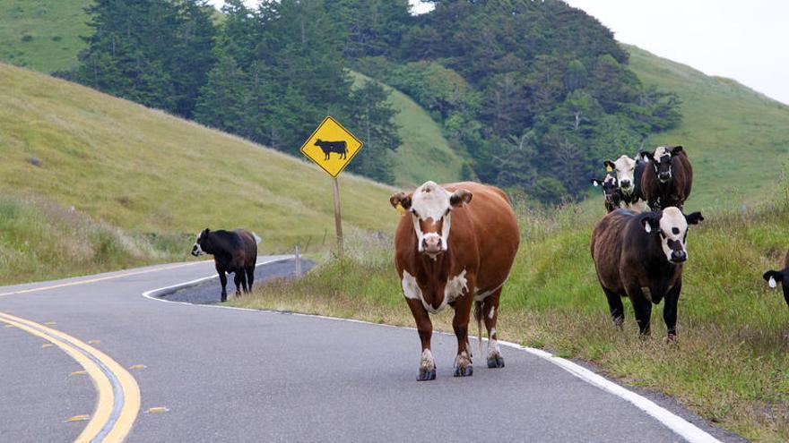 Muere arrollado por su coche tras bajarse para ahuyentar una vaca de la carretera