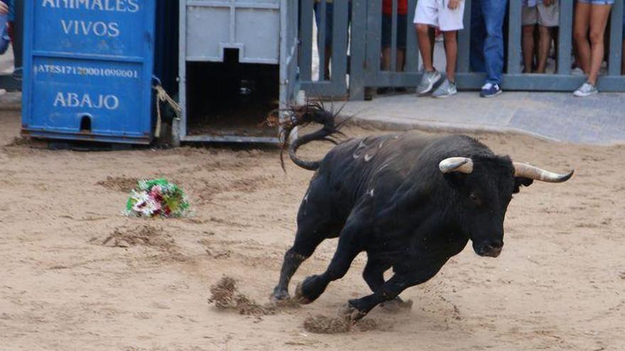 Nuevo herido por el toro en Burriana y corneada una joven de 16 años en Vila-real