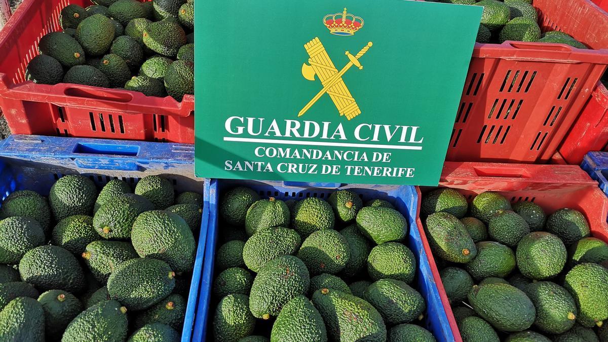 Investigados por el robo de 6.000 kilos de aguacates en Güímar (Tenerife)