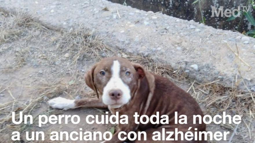 Un perro custodia toda la noche a un enfermo de Alzheimer extraviado en Burriana