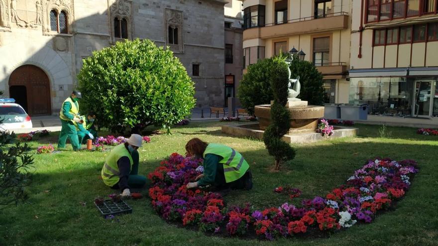 Hasta 4.000 plantas de flor en Zamora para dar color a la nueva normalidad