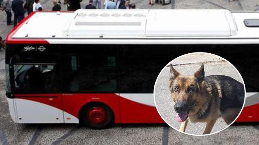 La iniciativa de subir perros al bus en Gijón incluye que vayan con bozal, de pie y documentados