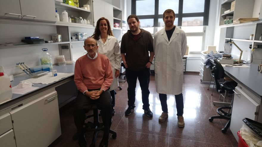 Investigadores de la UMU descubren que las células de Sertoli, de gran importancia en la reproducción, son capaces de renovarse
