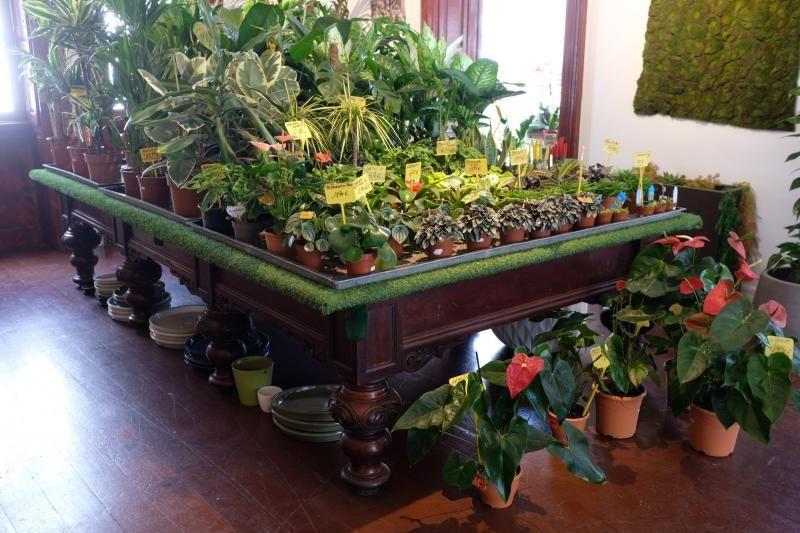 El Churchill reconvertido en tienda de plantas