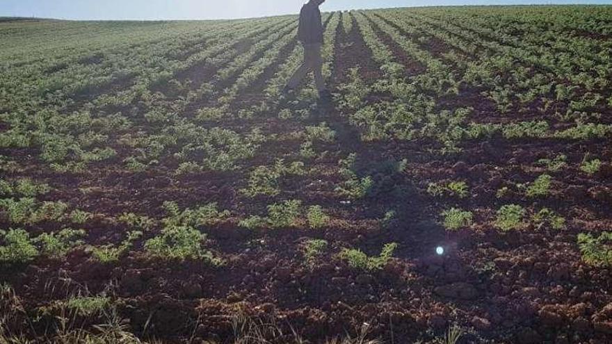 Reclaman más controles para evitar accidentes en la agricultura