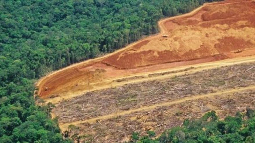 El Amazonas perdió dos campos de fútbol de selva cada minuto en 2020
