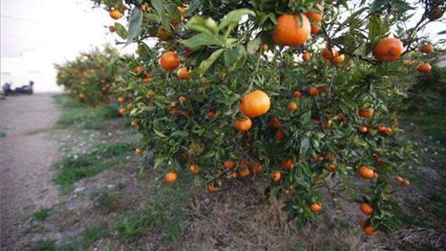Un agricultor denuncia el robo de 8.500 kilos de cítricos en Castellón