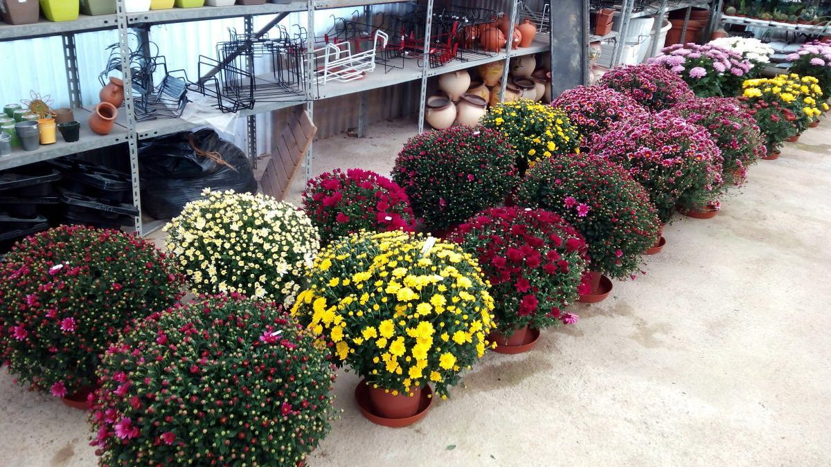 A Garden Sant Pere, els clients poden trobar l'opció més convenient.