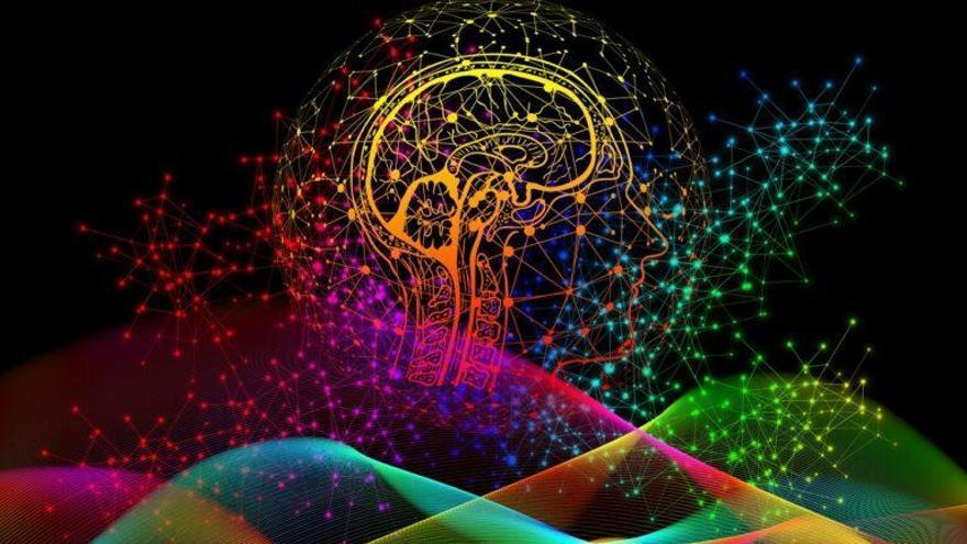 Identificadas las neuronas que regulan el comportamiento social