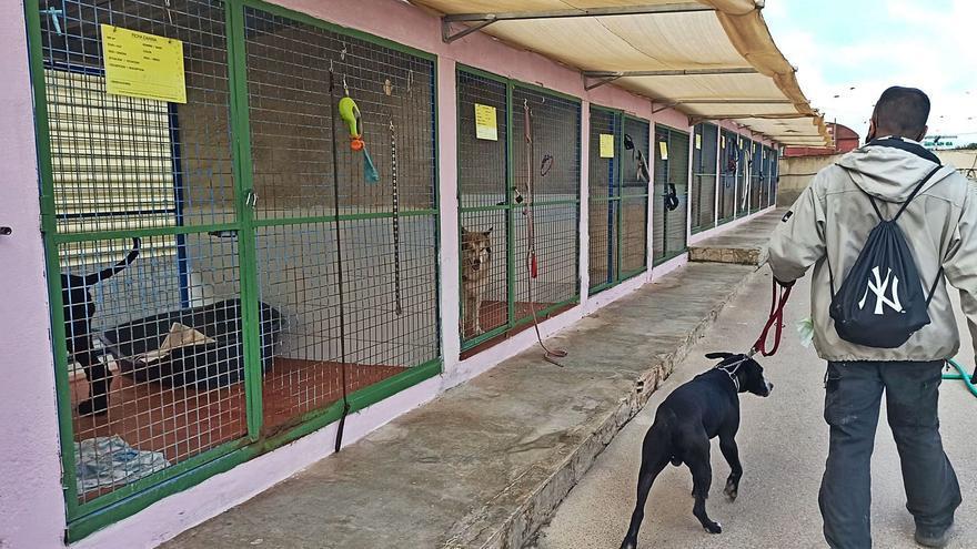 Torrevieja invertirá 700.000 euros en el nuevo albergue de animales sobre cinco mil metros cuadrados