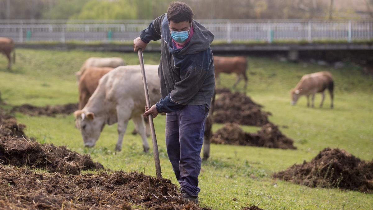 Un trabajador del sector ganadero.