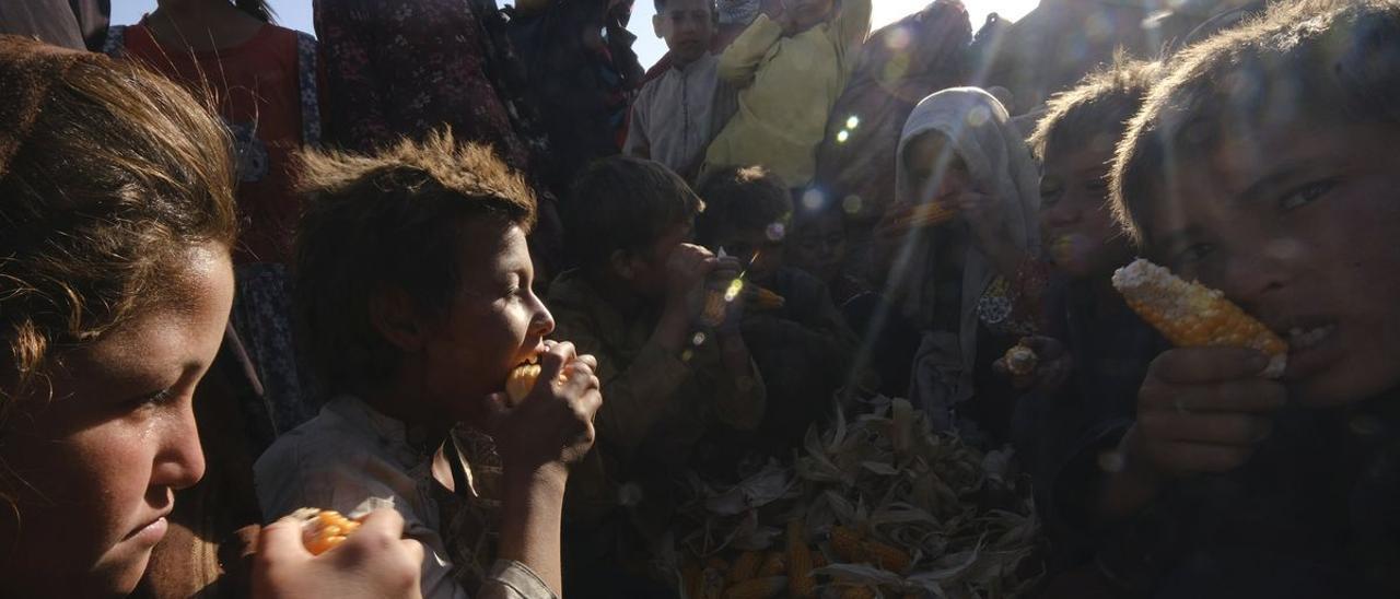 Unos niños afganos comen panochas crudas en un improvisado ampo de de refugiados en Mazar-e-Sharif.
