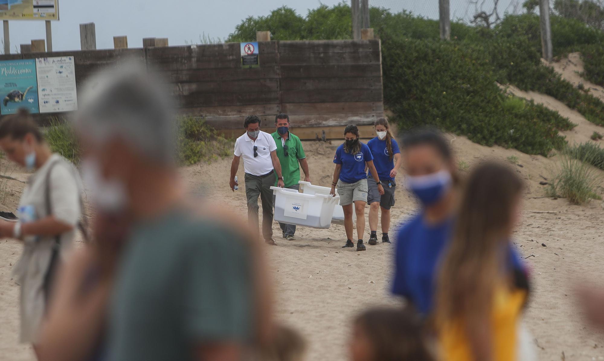 Liberación de tortugas marinas en el Parador de El Saler