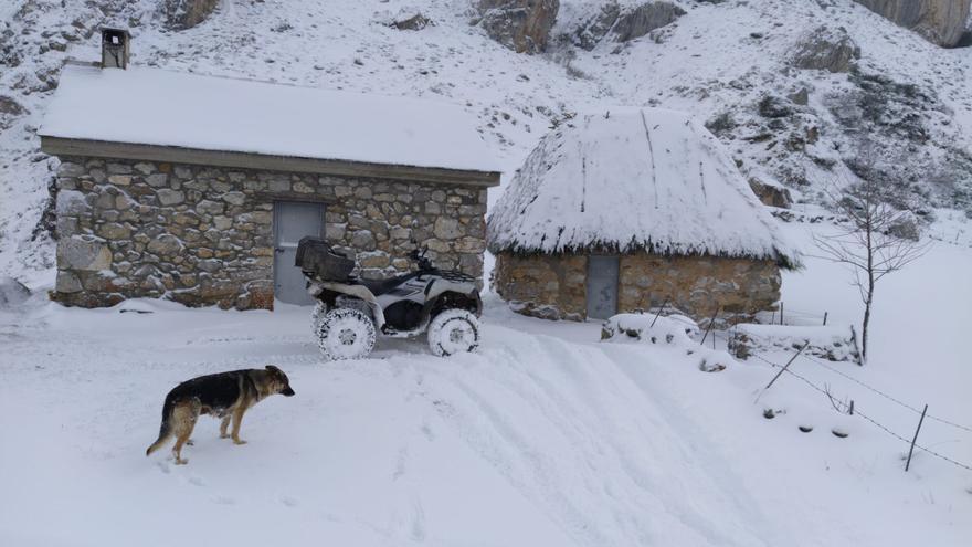 Llegó la nieve a Asturias: frío, viento y 20 puertos de montaña requieren del uso de cadenas