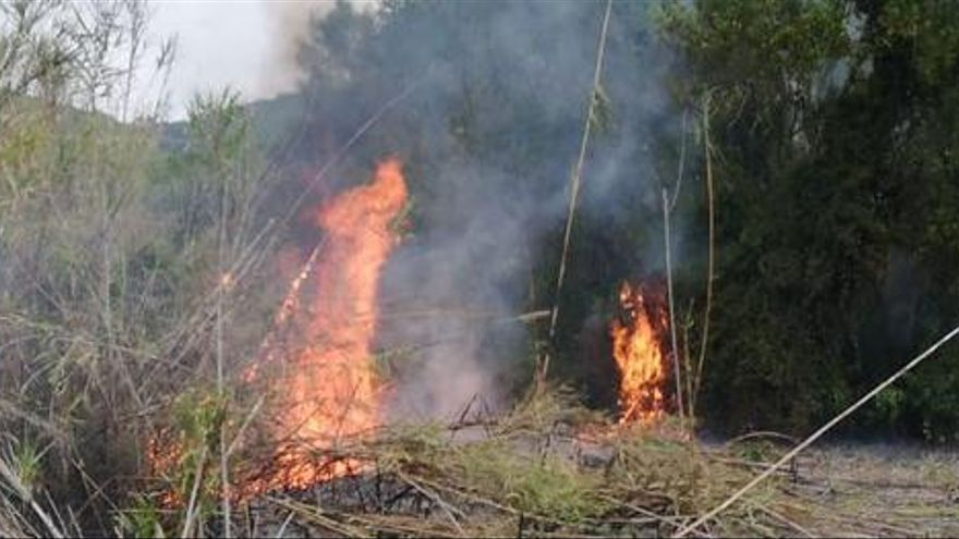 Un incendio forestal quema 0,2 hectáreas de cañas en Benirràs