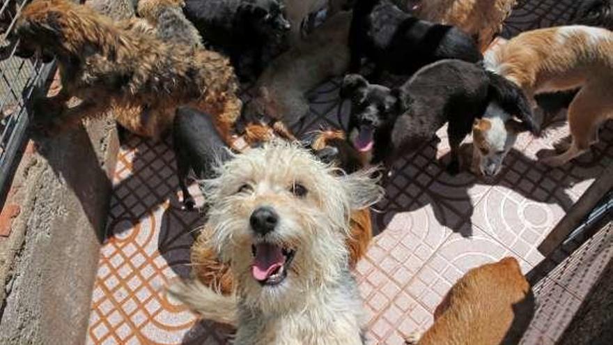 La Protectora de Animales de Vigo recogió casi 550 mascotas en lo que va de año y está desbordada