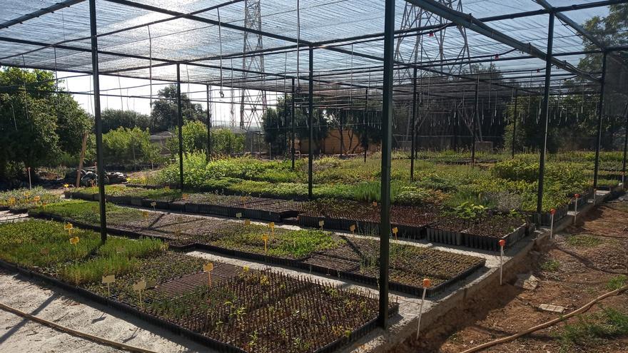 El centro agropecuario provincial entrega 40.000 árboles y arbustos a los municipios de la provincia