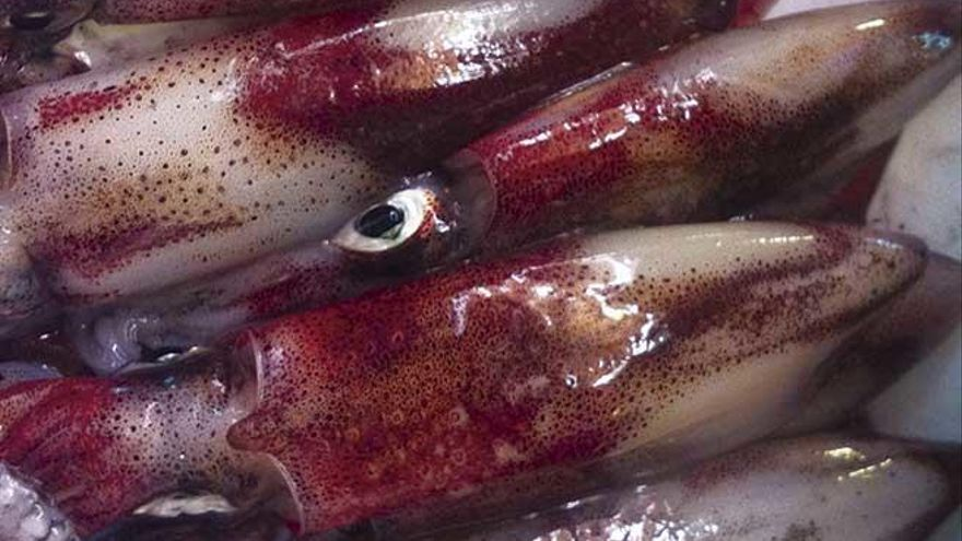 Calamars farcits