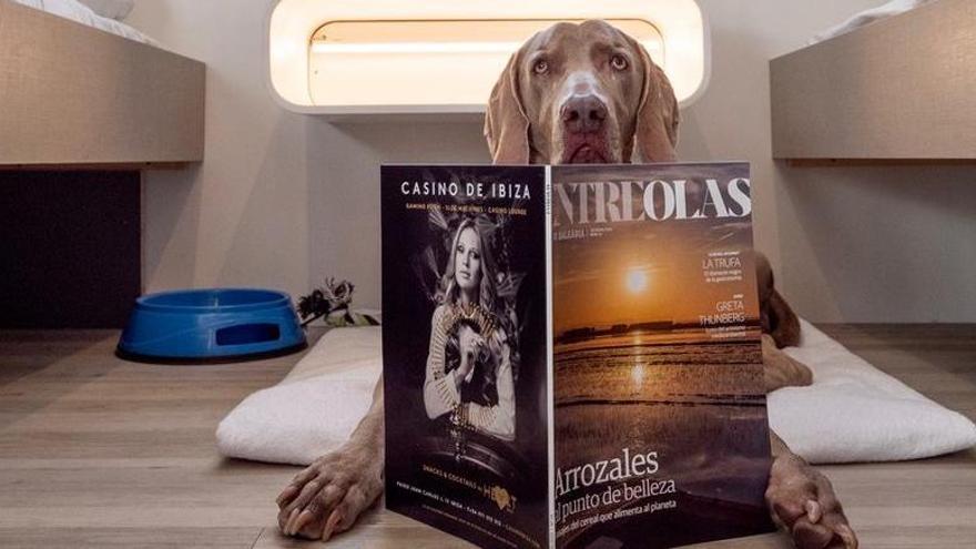 Balèaria lässt jetzt Hunde und Katzen in die Kabine