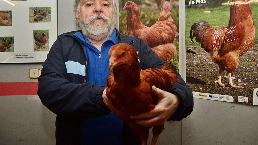 El virus que hace mella en los gallineros