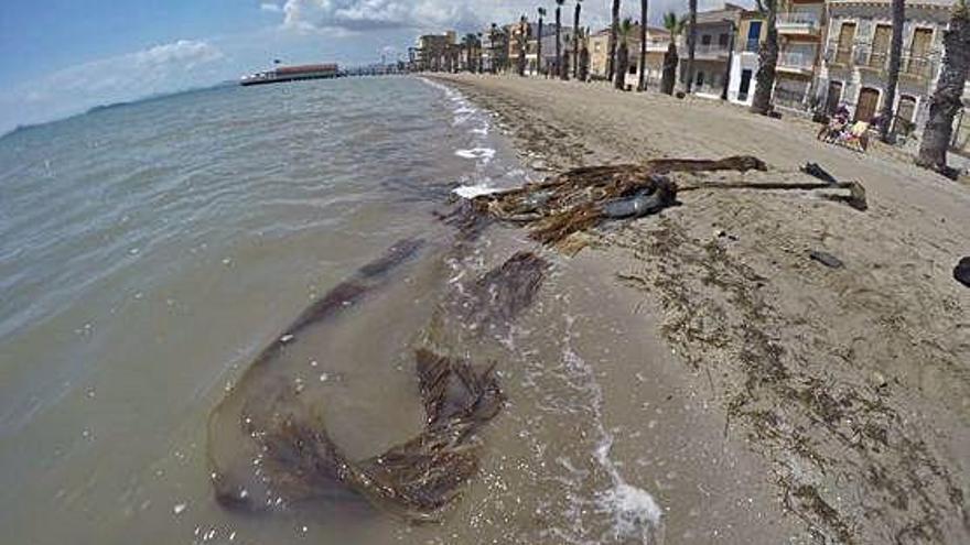 Brigadas especiales limpiarán las playas de Los Alcázares