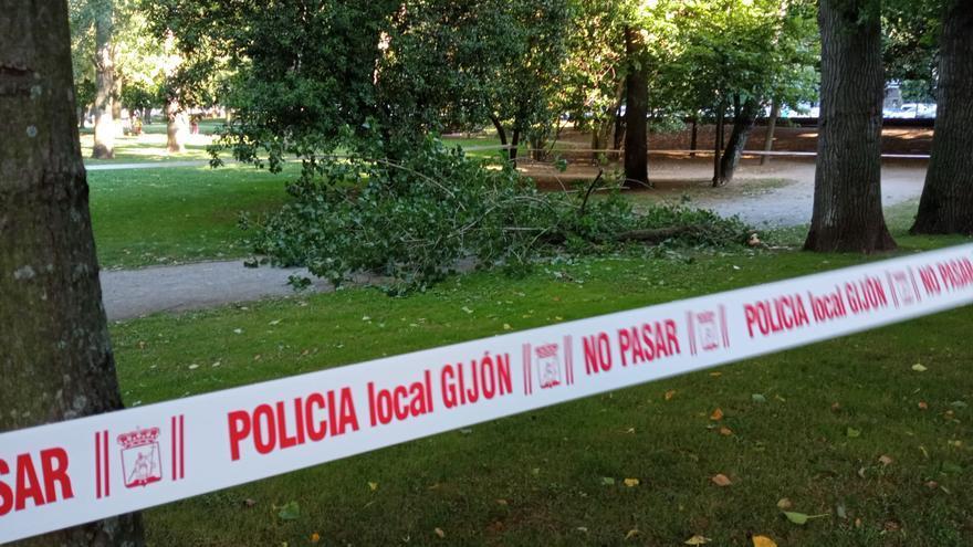Desprendimiento de una rama en el parque Isabel la Católica