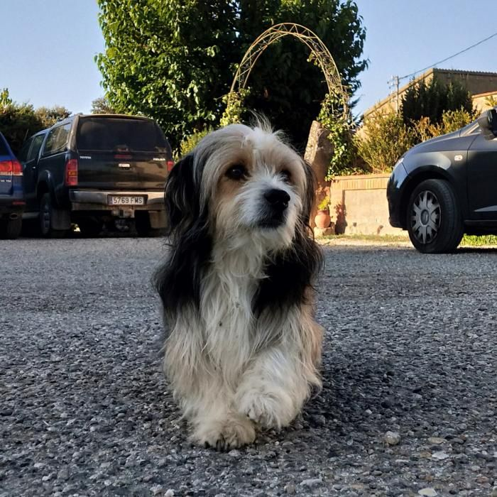 Aquest gos cardoní semblava esperar que li fessin la foto.