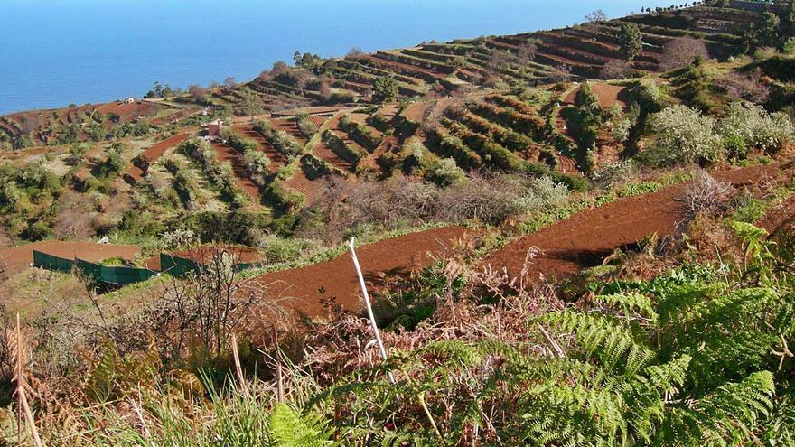 Agricultura destina 200.000 euros a recuperar zonas de cultivo abandonadas