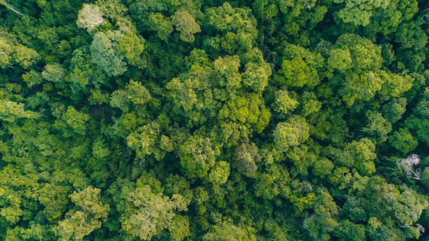 La restauración de los bosques tropicales mejora un 50% la absorción de carbono