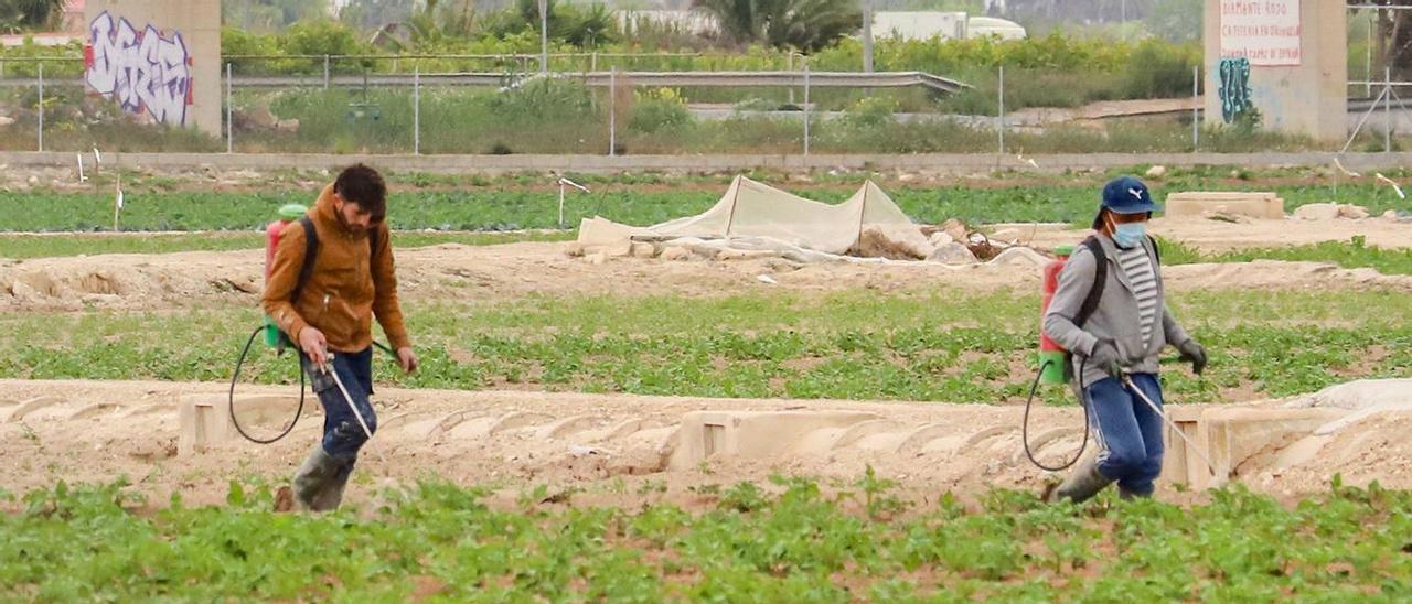 Dos agricultores fumigan la cosecha junto al trasvase.