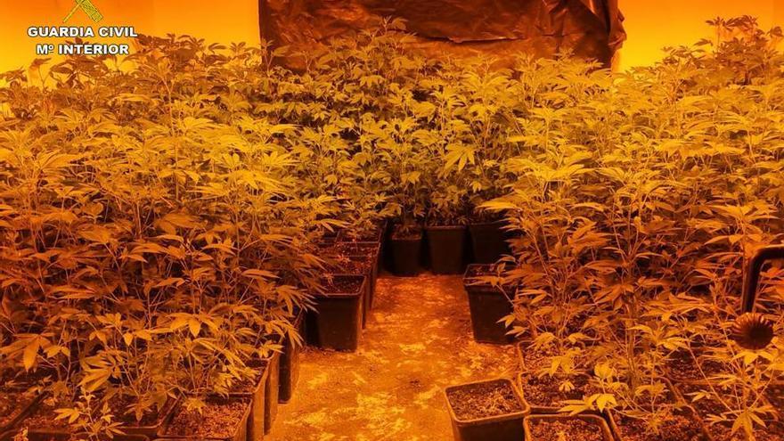 Le encargan cuidar dos casas en Parcent e instala una plantación de marihuana