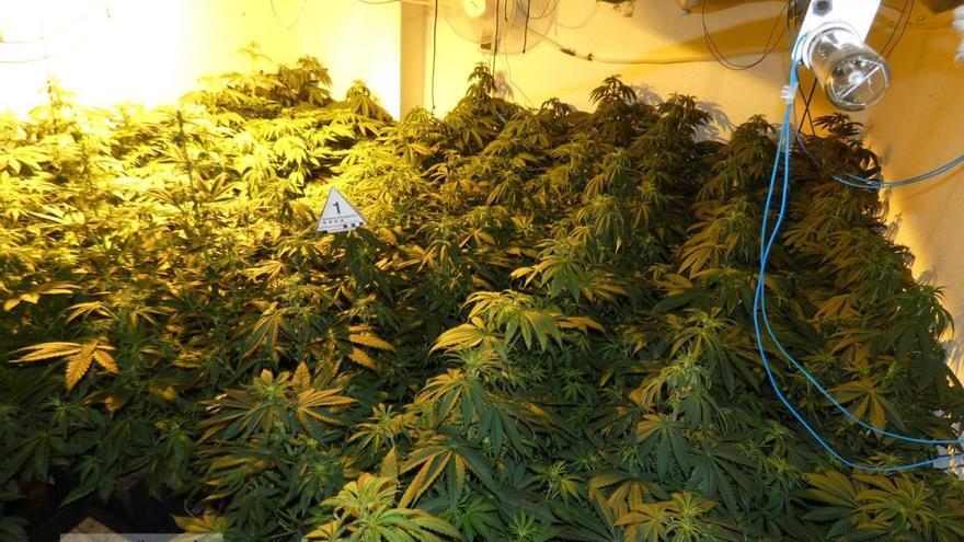 Dos detinguts per cultivar plantes de marihuana en una casa de Vilanant