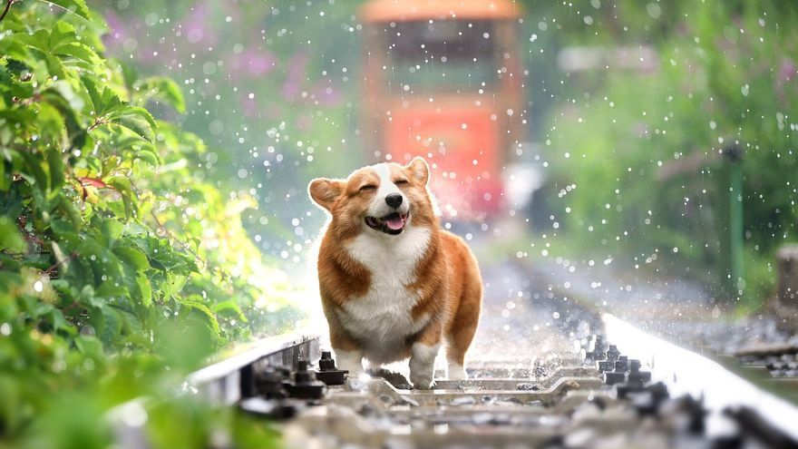 ¿Cuáles son los nombres de perro más populares en todo el mundo?