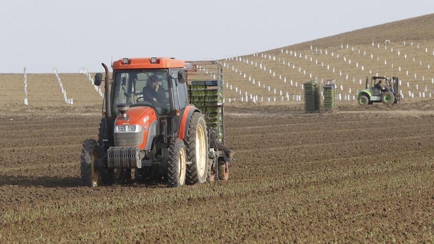 El sector agrario cordobés pide el apoyo de los ayuntamientos