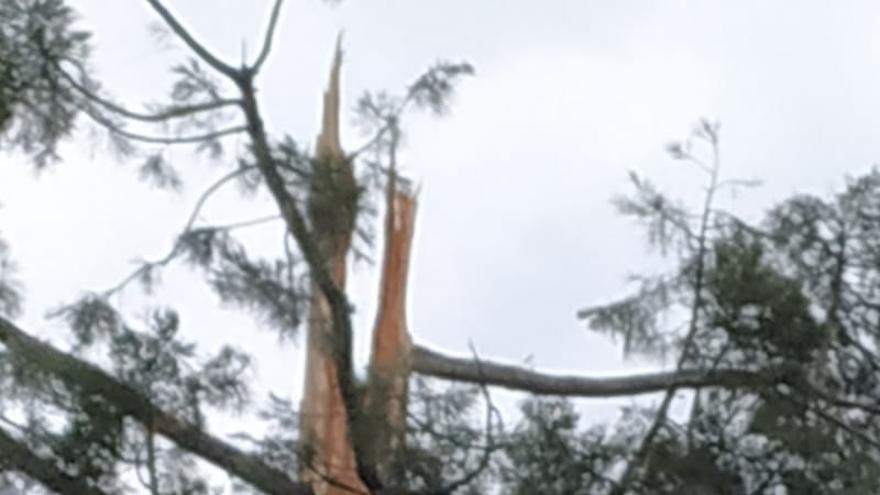Un llamp esberla una sequoia centenària