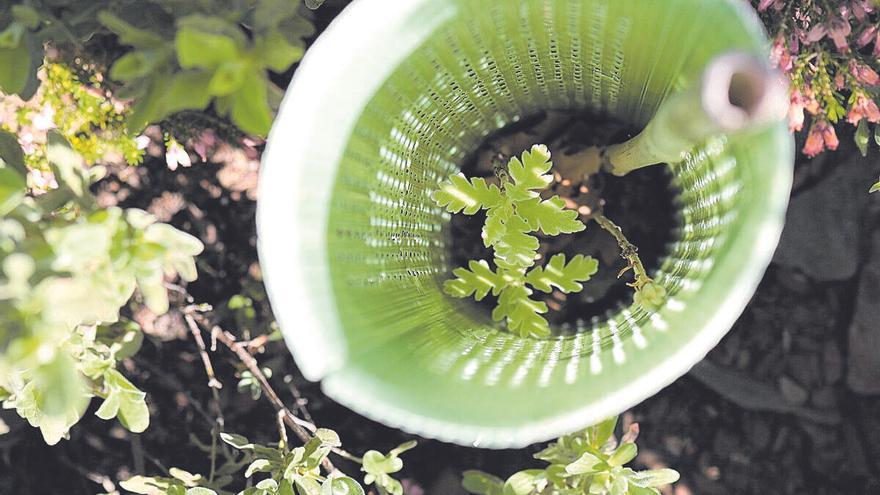 Per cada arbre plantat,  una glopada d'aire