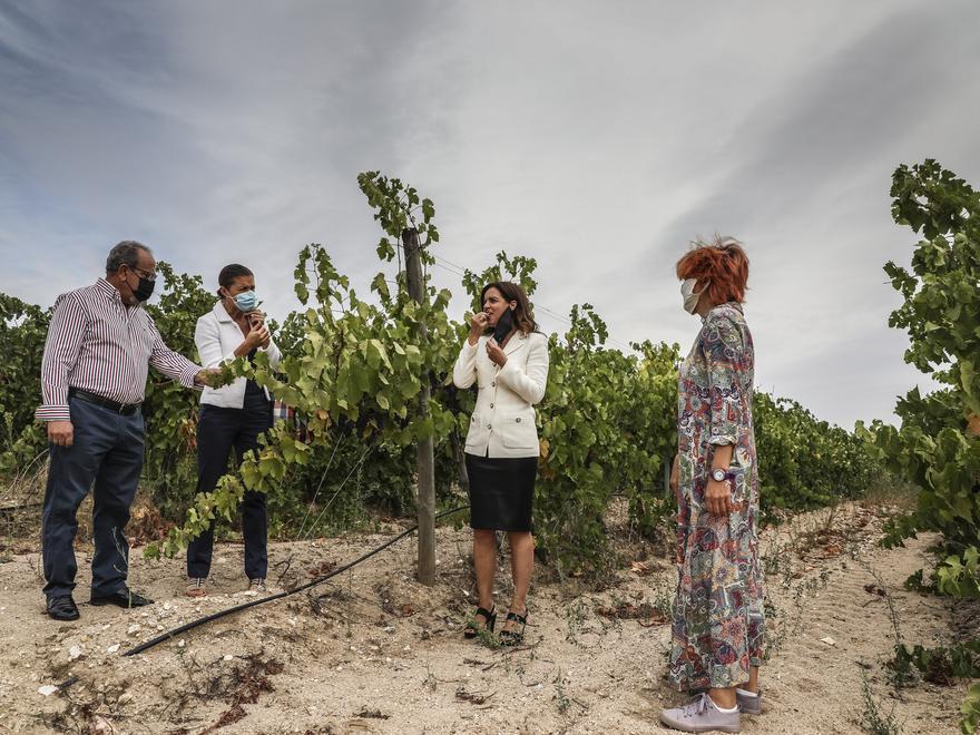 La consejera de Empleo, Carlota Amigo, en un viñedo de la DO Arribes en Fermoselle. | Nico Rodríguez