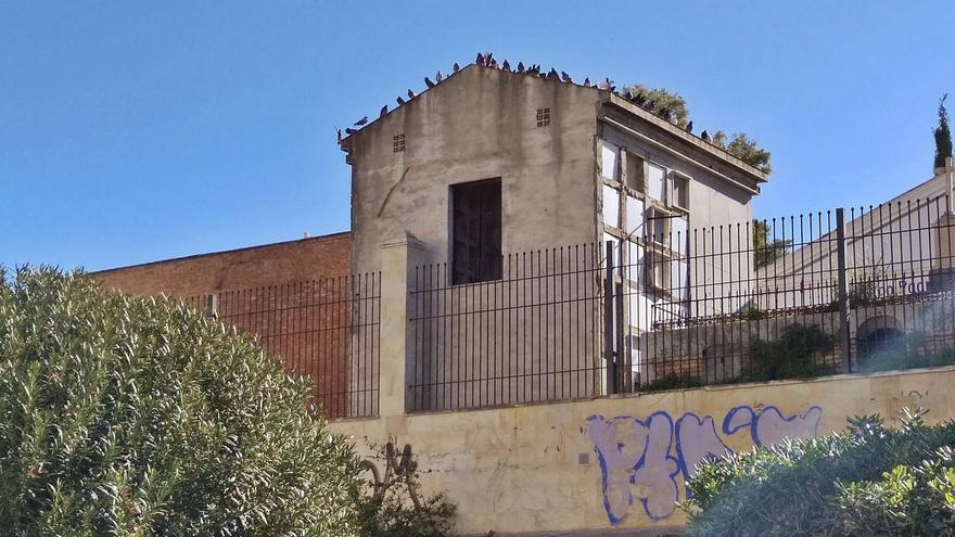 Las palomas de Málaga  ya son casi centenarias
